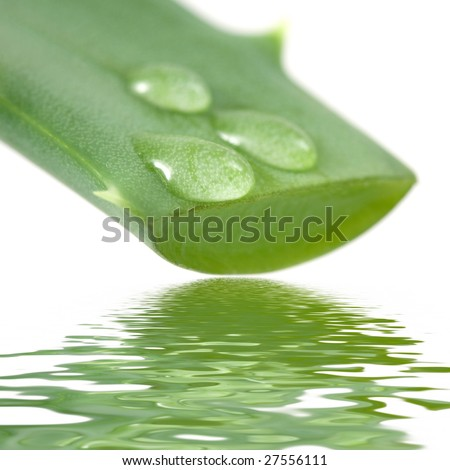 Aloe leaf with juice droplet - stock photo