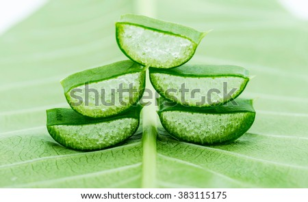 Aloe on green leaf - stock photo