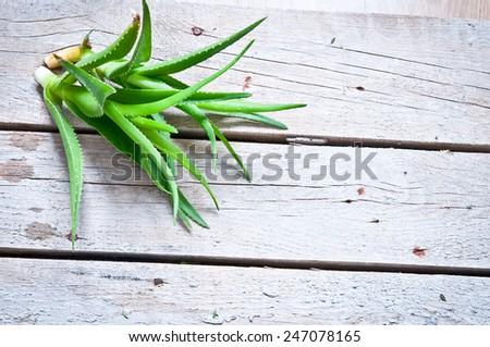 Aloe vera - stock photo