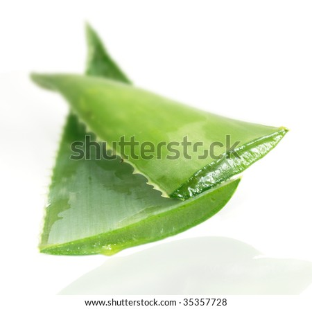 Aloe vera, close up of open leaves - stock photo