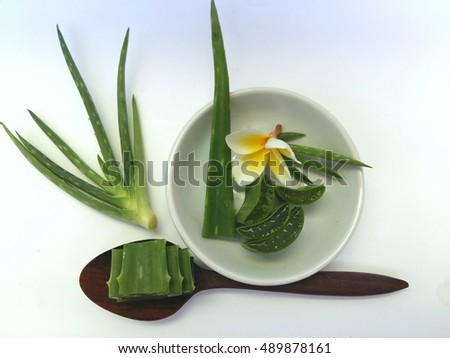Aloe vera for spa and beauty with plumeria flowers so beautiful on white background