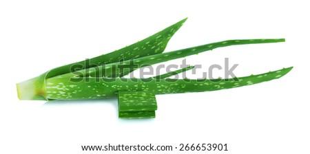 aloe vera fresh leaf isolated on white. - stock photo