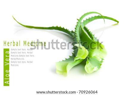 Aloe vera herbal medicine - stock photo