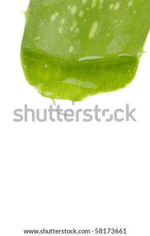 Aloe vera isolated - stock photo