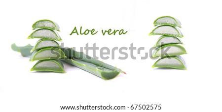 Aloe vera isolated on white background - stock photo