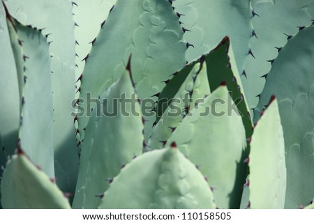 aloe vera perfect background - stock photo