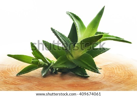 Aloe vera plant, isolated on a white background on wooden board. - stock photo