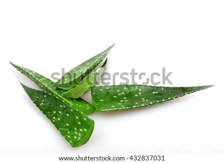 Aloe vera plant on white.