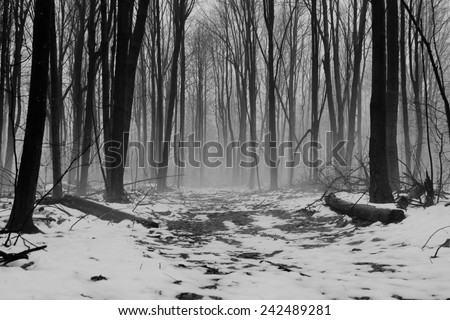 Alone. A remote winter forest immersed in fog with trail leading into the unknown.  - stock photo