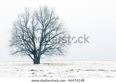 Alone bare tree on autumn field with rare snow