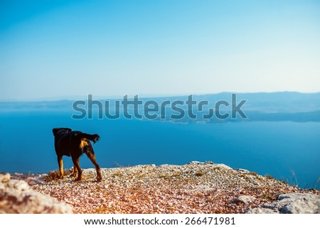 Alone dog on the top of mountain looking at sea - stock photo
