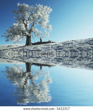 Alone frozen tree - stock photo
