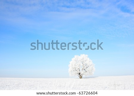 Alone frozen tree and clear blue sky - stock photo