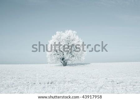 Alone frozen tree in field - stock photo