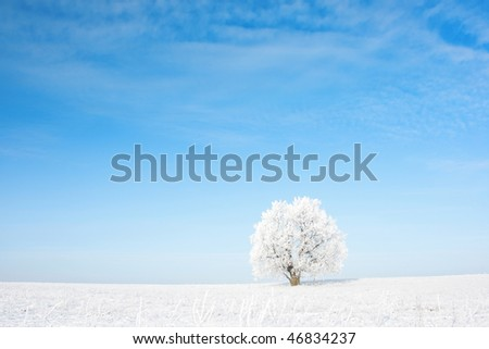 Alone frozen tree in field and blue clear sky - stock photo