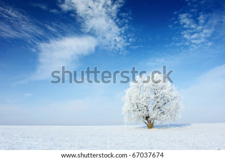 Alone frozen tree in field and blue sky with clouds