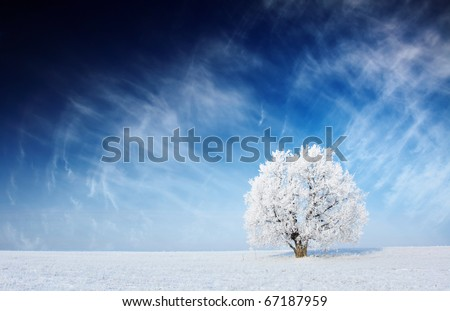 Alone frozen tree in field and blue sky with clouds - stock photo