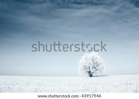 Alone frozen tree in field with blue sky - stock photo