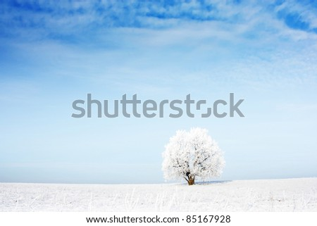 Alone frozen tree in snowy field and airy blue sky