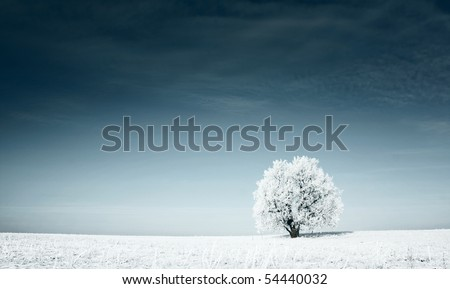 Alone frozen tree in snowy field and dark blue sky - stock photo