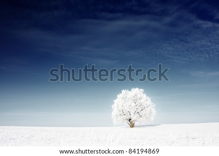Alone frozen tree in snowy field and deep blue sky - stock photo