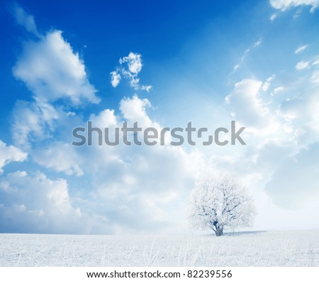 Alone frozen tree in winter snowy field - stock photo