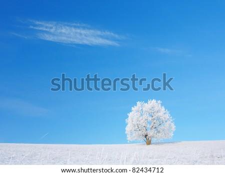 Alone frozen tree in winter snowy field - stock photo