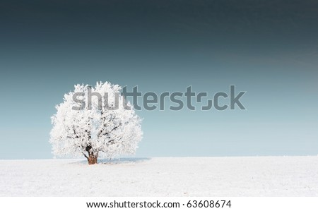 Alone frozen tree on snowy field and dark sky - stock photo
