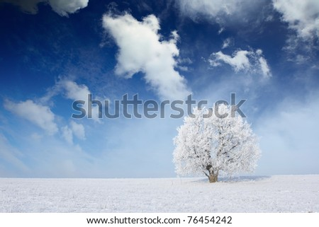 Alone frozen tree on winter field and blue sky with clouds