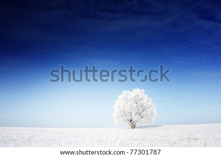Alone frozen tree on winter field and blue sky with rare clouds