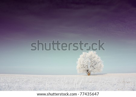 Alone frozen tree on winter field with rare clouds - stock photo