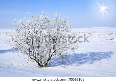 Alone frozen tree. white winter - stock photo