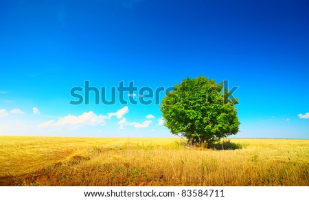 Alone green tree in a yellow wheat field - stock photo