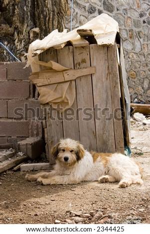 alone homeless dog - stock photo