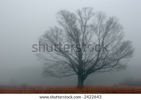 Alone in the Fog. A tree isolated by the heavy fog of an autumn morning. - stock photo