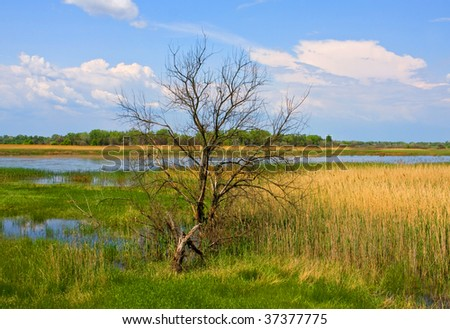 Alone leafless tree near backwater - stock photo