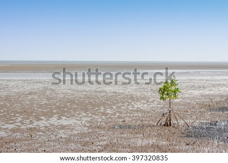 Alone mangrove tree grows in the ocean beach with blue sky background - stock photo