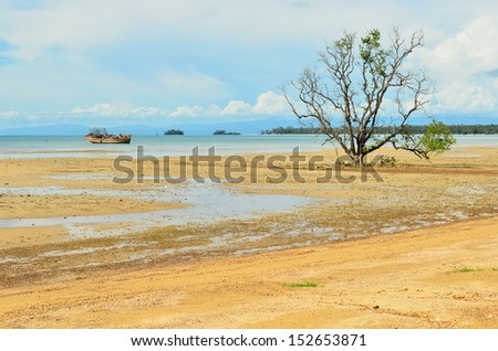 Alone mangrove tree grows in the shallow water - stock photo