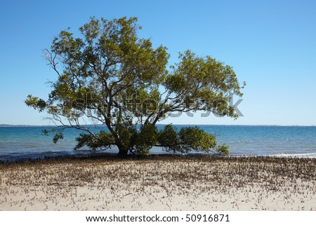 Alone mangrove tree rounded by it's roots - stock photo
