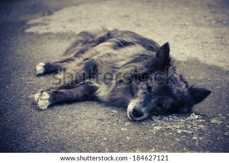 Alone old dog is lying to the outside. - stock photo