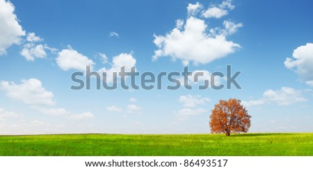 Alone red autumn tree on a green meadow and blue sky with clouds - stock photo