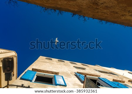 Alone seagull soars in the sky. - stock photo