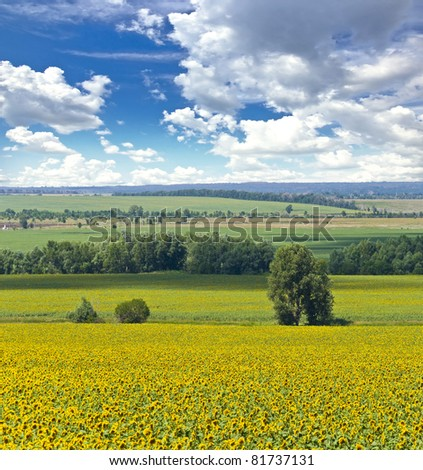 Alone tree and field of sunflowers. Summer landscape against the blue clear sky. - stock photo