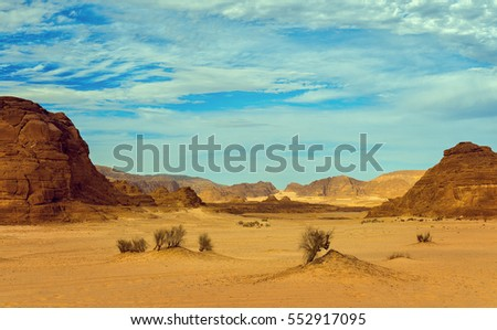alone tree and stone in the sand among hot desert in morning , atmospheric desert landscape, esoteric picture