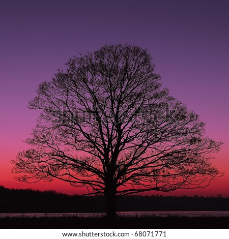 Alone Tree at night
