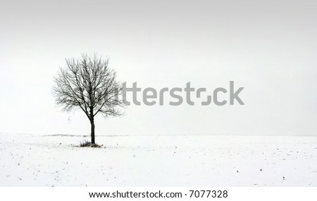 Alone tree in field during first snow 2 - stock photo