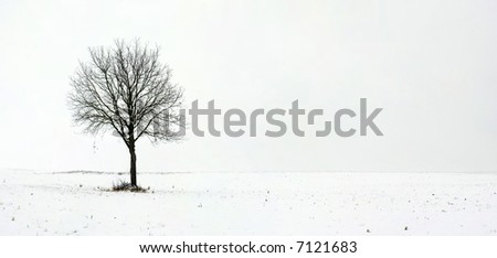 Alone tree in field during first snow 1 - stock photo