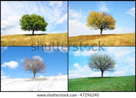 alone tree in for season - stock photo
