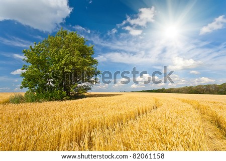 alone tree in wheat field over cloudy blue sky - stock photo