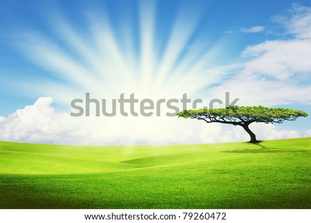alone tree on grass field